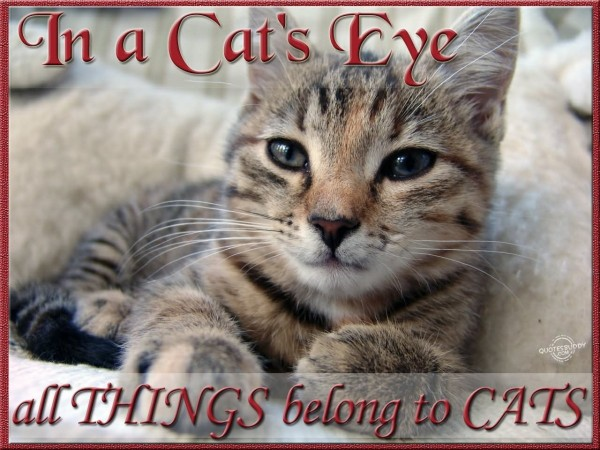 In a cats eye all things belong to cats