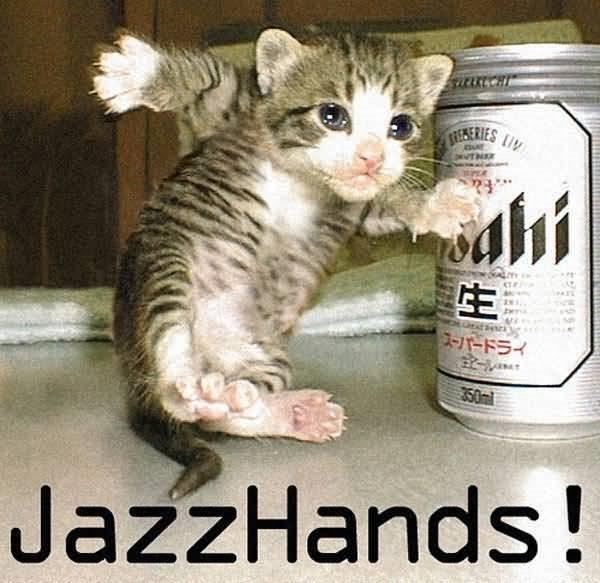 Jazz handa funny cat