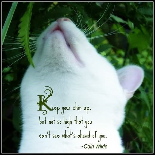 Keep your chin up cat