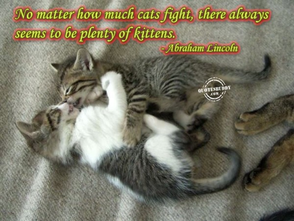 No matter how much cats fight there always seems to be plenty of kittens