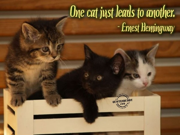 One cat just leads to another