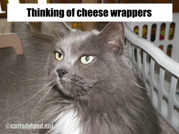Thinking of cheese wrappers