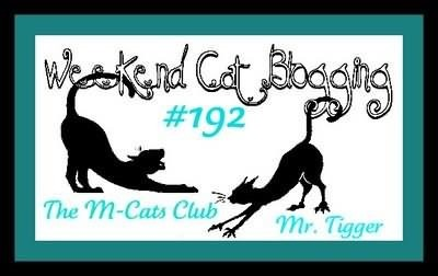 Weekend cat blogging m cats club