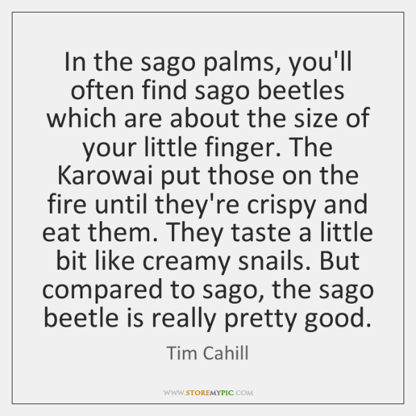 In the sago palms, you'll often find sago beetles which are about ...