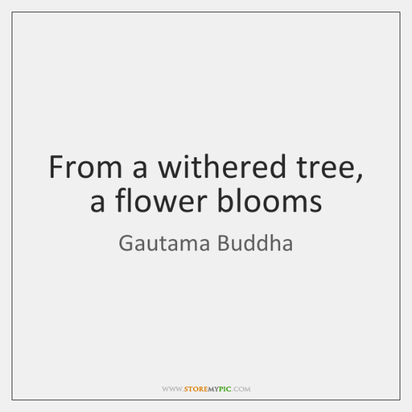 From a withered tree, a flower blooms
