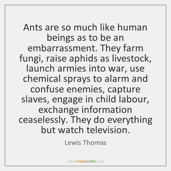 Ants are so much like human beings as to be an embarrassment. ...
