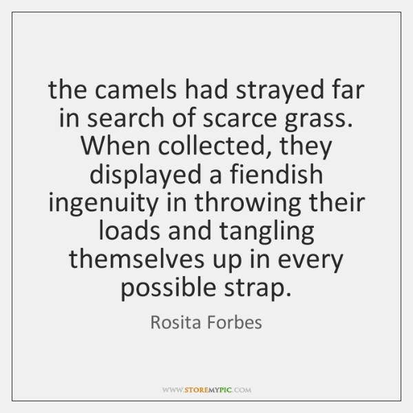 the camels had strayed far in search of scarce grass. When collected, ...