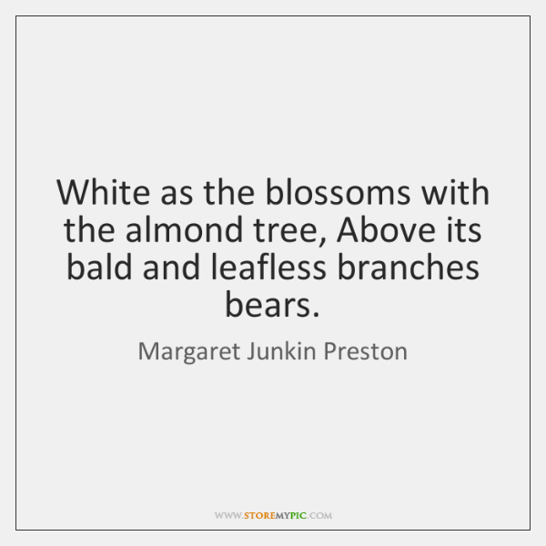 White as the blossoms with the almond tree, Above its bald and ...
