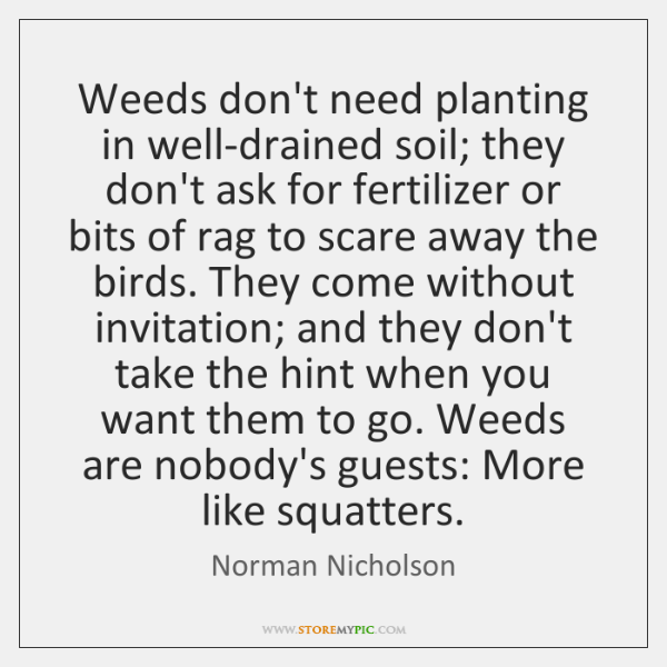 Weeds don't need planting in well-drained soil; they don't ask for fertilizer ...
