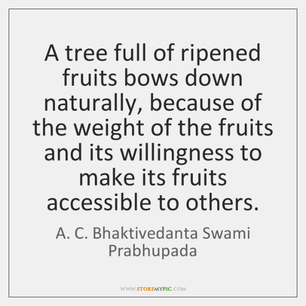 A tree full of ripened fruits bows down naturally, because of the ...