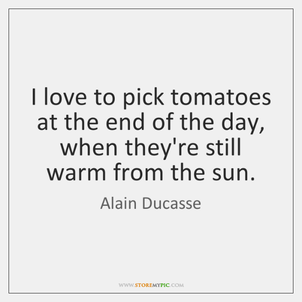 I love to pick tomatoes at the end of the day, when ...