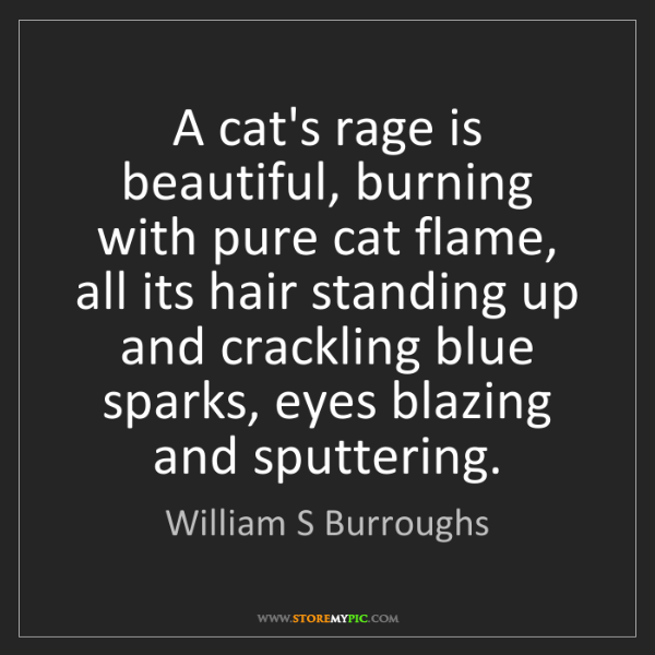 William S Burroughs: A cat's rage is beautiful, burning with pure cat flame,...