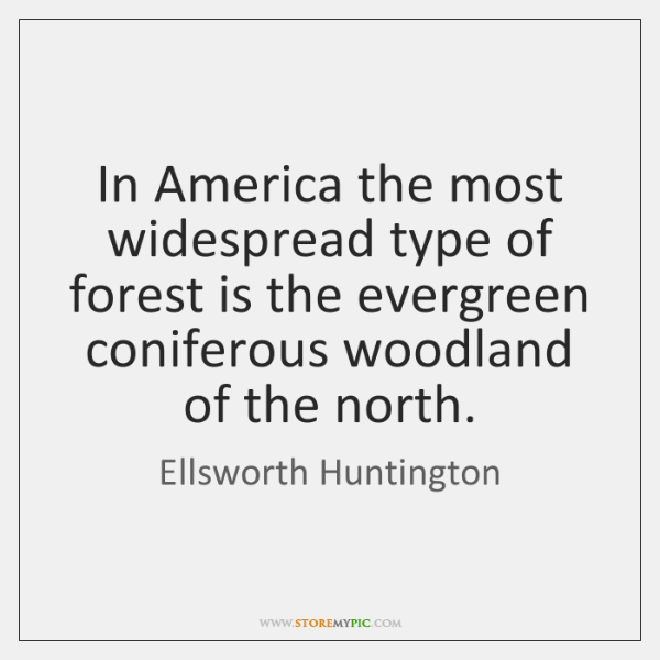 In America the most widespread type of forest is the evergreen coniferous ...