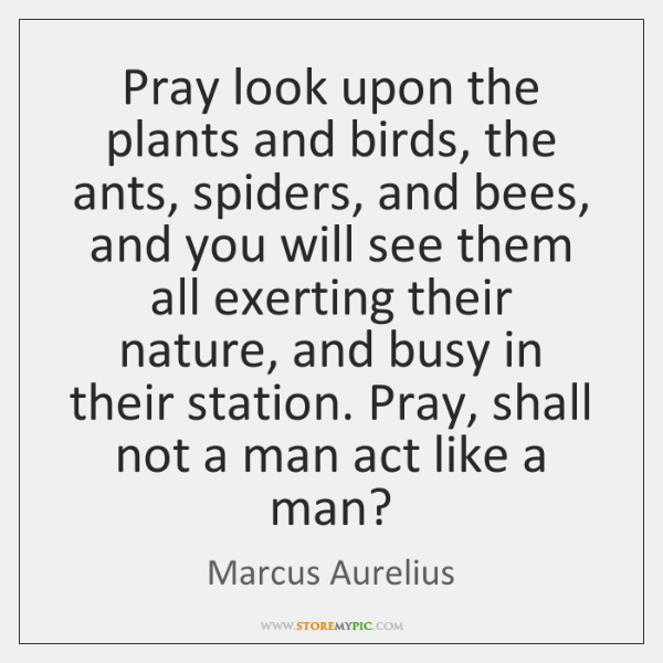 Pray look upon the plants and birds, the ants, spiders, and bees, ...