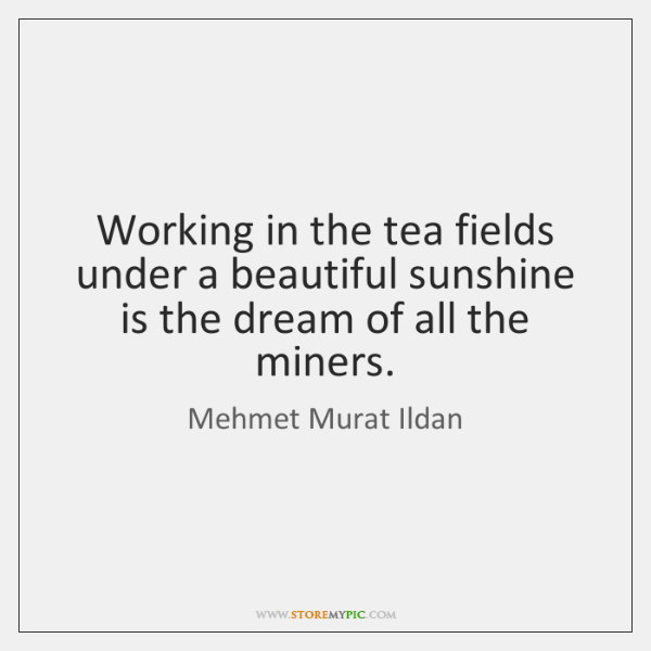 Working in the tea fields under a beautiful sunshine is the dream ...