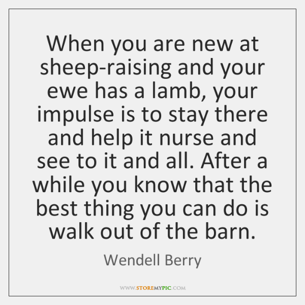 When you are new at sheep-raising and your ewe has a lamb, ...