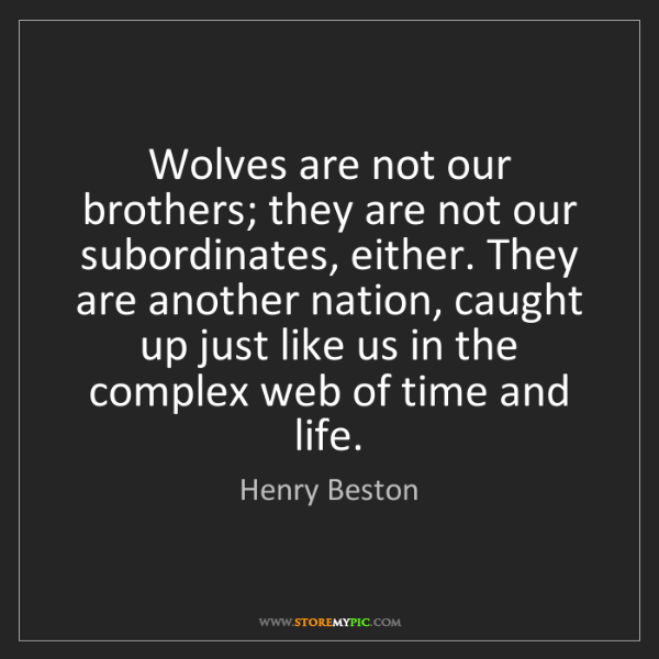 Henry Beston: Wolves are not our brothers; they are not our subordinates,...