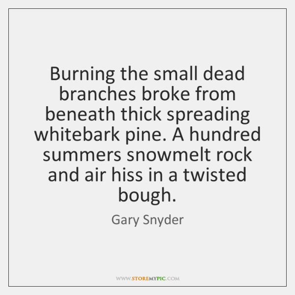 Burning the small dead branches broke from beneath thick spreading whitebark pine. ...