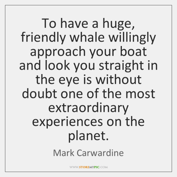 To have a huge, friendly whale willingly approach your boat and look ...