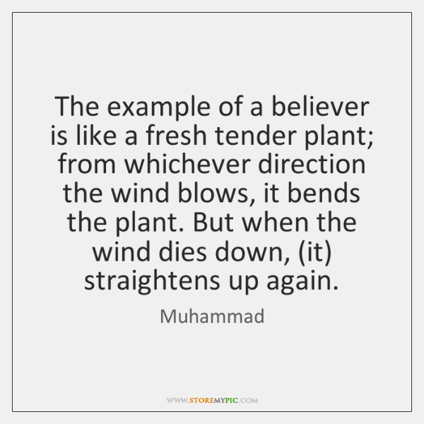 The example of a believer is like a fresh tender plant; from ...