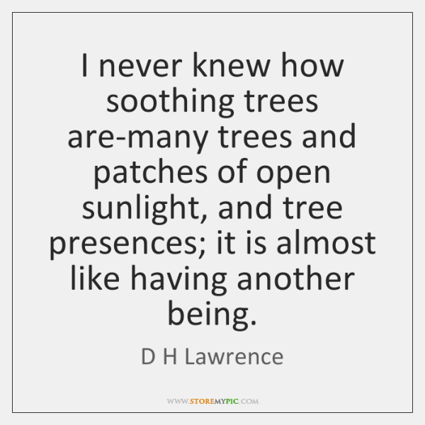 I never knew how soothing trees are-many trees and patches of open ...