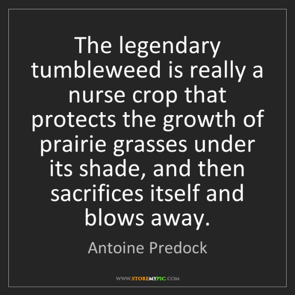 Antoine Predock: The legendary tumbleweed is really a nurse crop that...