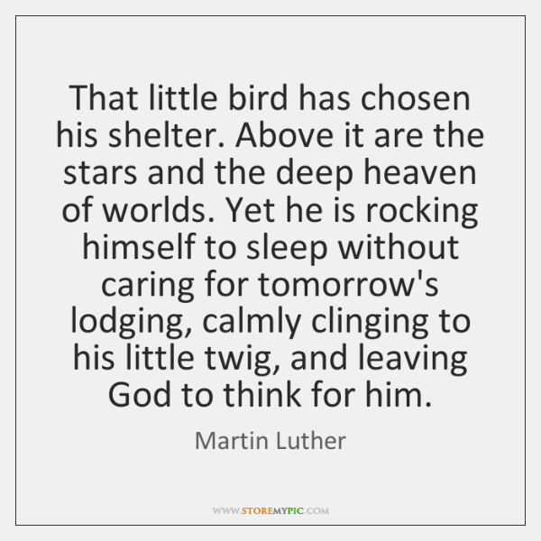 That little bird has chosen his shelter. Above it are the stars ...