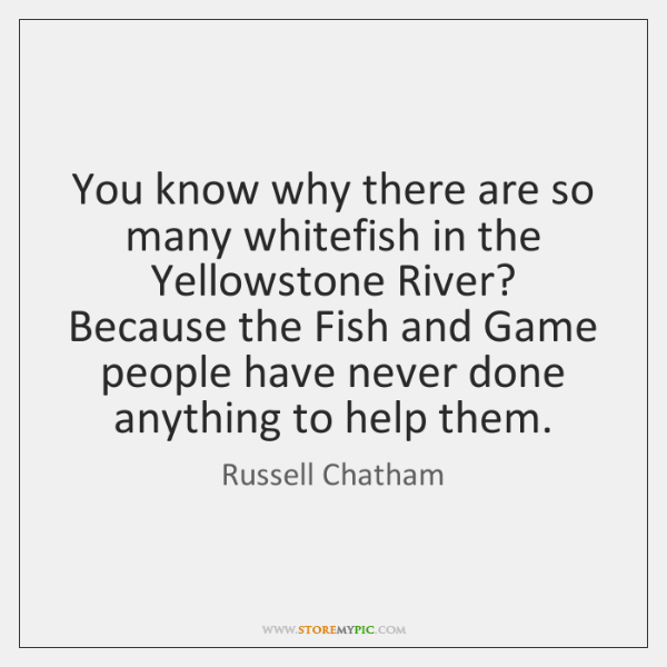 You know why there are so many whitefish in the Yellowstone River? ...