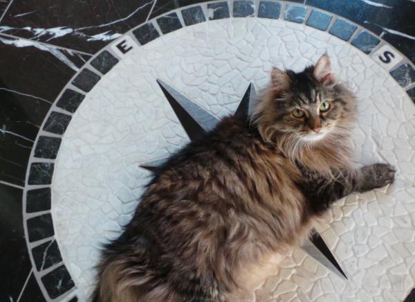 cat compass00