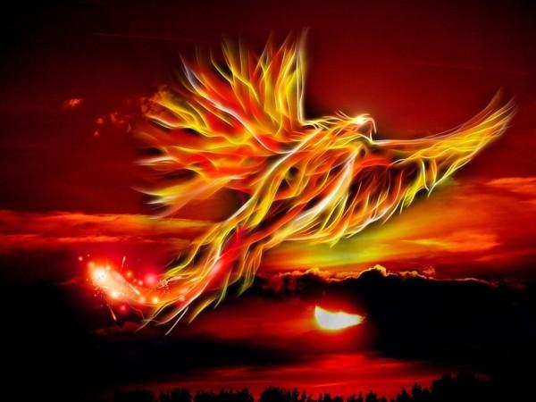 phoenix 500469 960 720